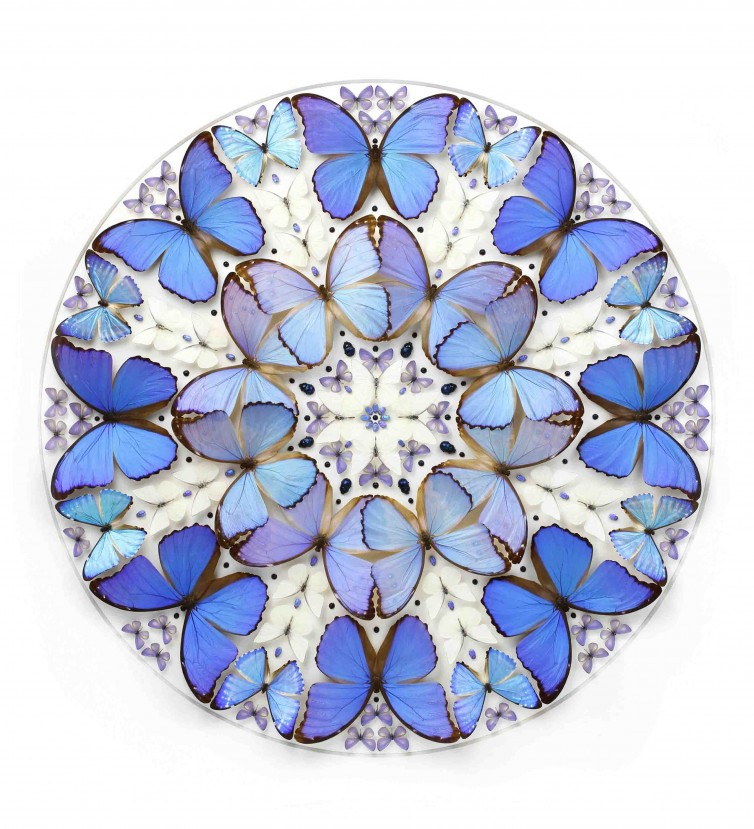CMarley Collection: 40×40 Morpho Inflorescence